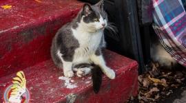 heidcat